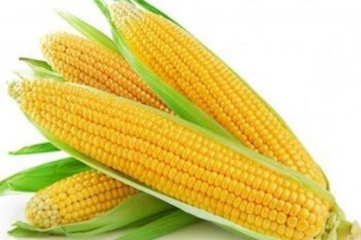 Picture of Sweet Corn (4 pkt)