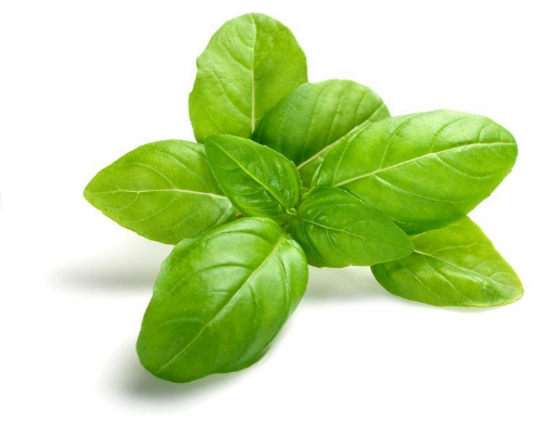 Picture of Basil (100g)